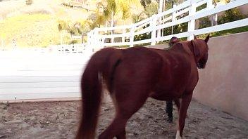 Худенькую рыженькую суку ебет африканец с огромным фаллосом